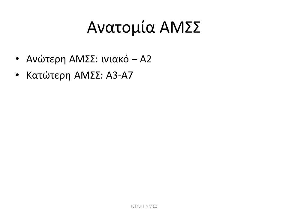 Ανατομία ΑΜΣΣ Ανώτερη ΑΜΣΣ: ινιακό – Α2 Κατώτερη ΑΜΣΣ: Α3-Α7