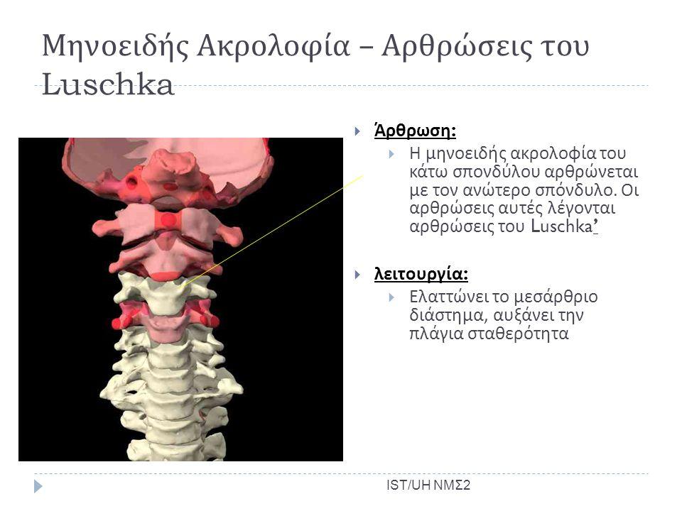 Μηνοειδής Ακρολοφία – Αρθρώσεις του Luschka