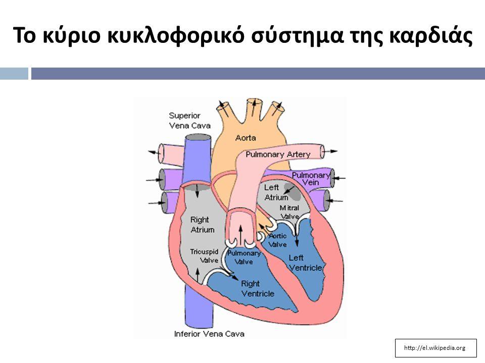 Το κύριο κυκλοφορικό σύστημα της καρδιάς