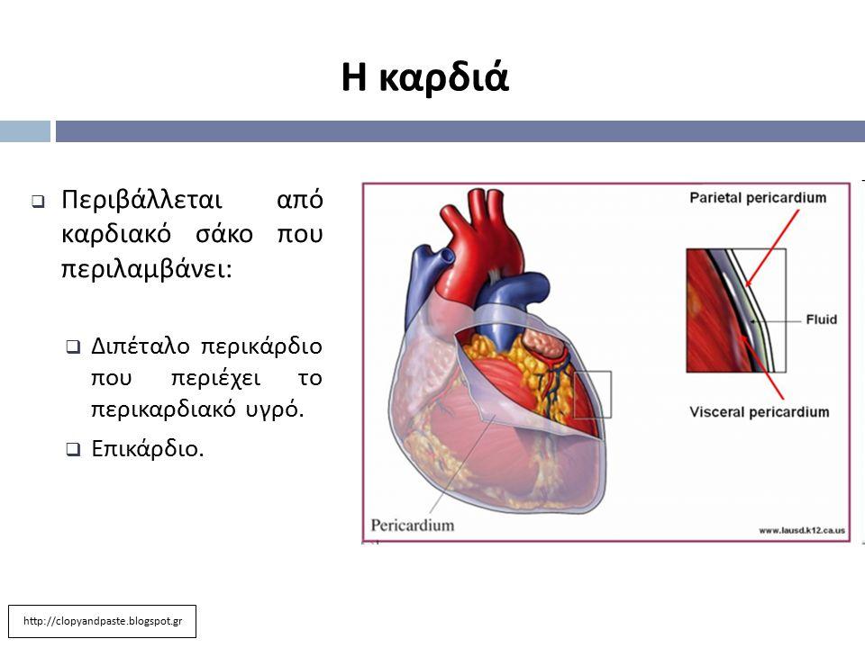 Η καρδιά Περιβάλλεται από καρδιακό σάκο που περιλαμβάνει: