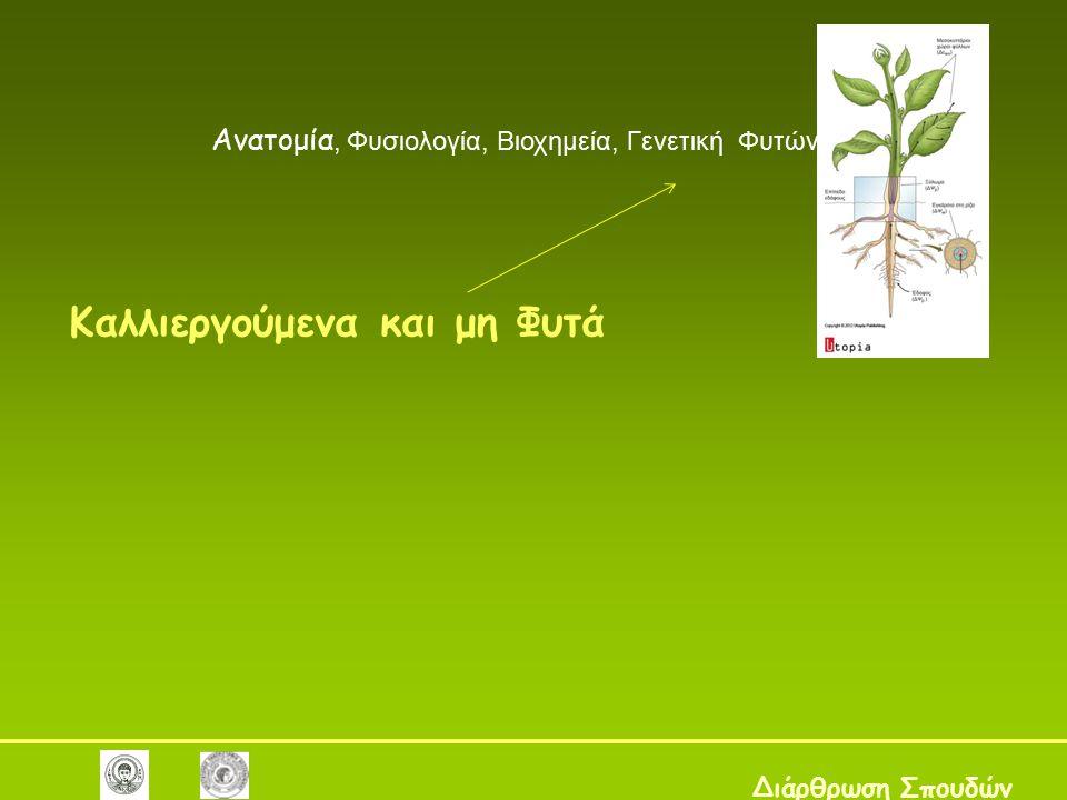 Καλλιεργούμενα και μη Φυτά