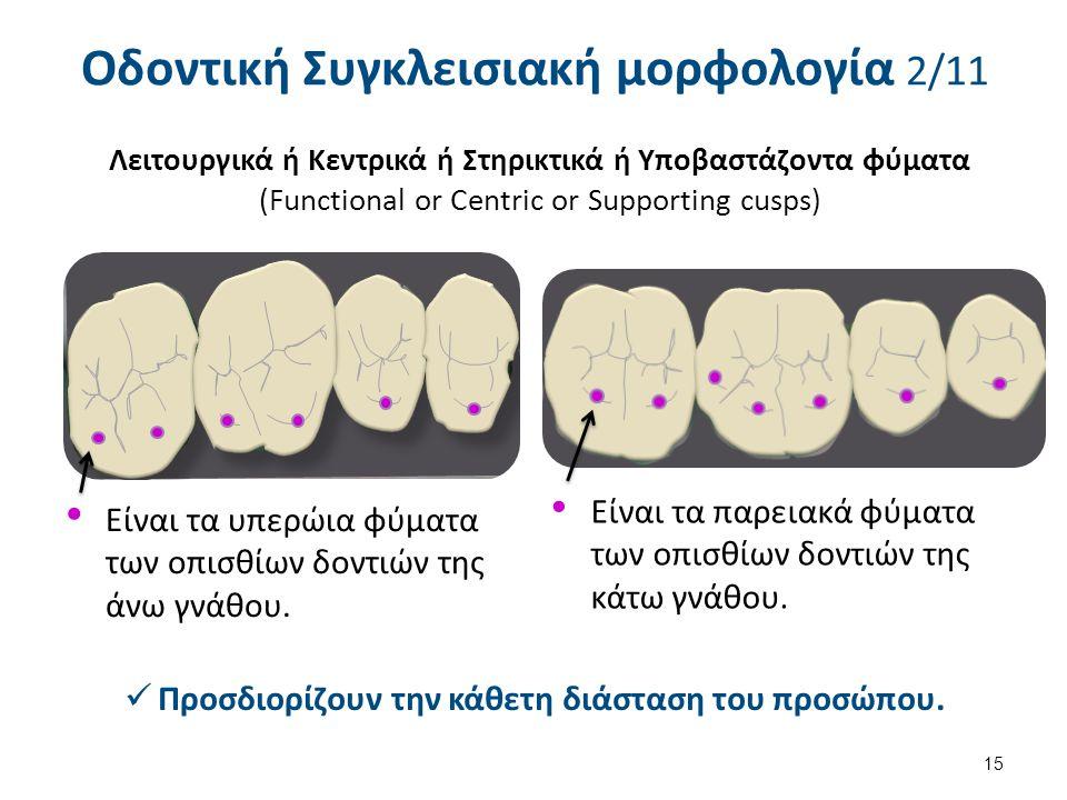 Οδοντική Συγκλεισιακή μορφολογία 3/11