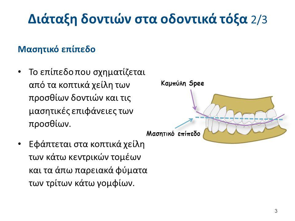 Διάταξη δοντιών στα οδοντικά τόξα 3/3