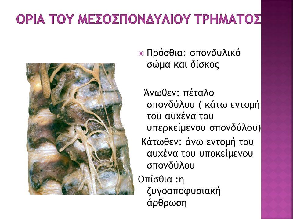 ορια του Μεσοσπονδυλιου Τρηματος