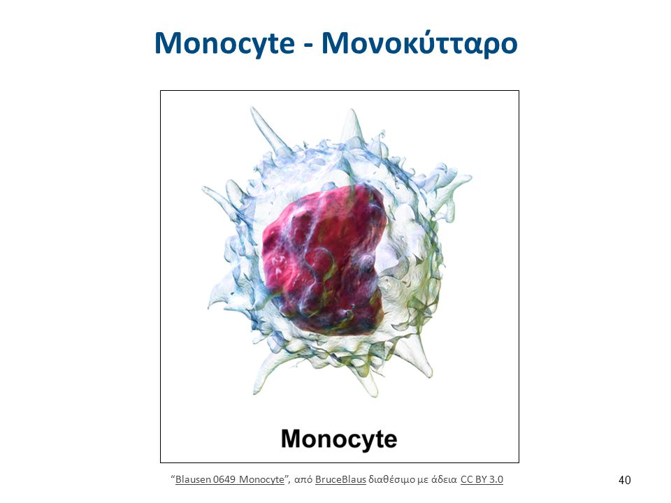 Macrophage - Μακροφάγο