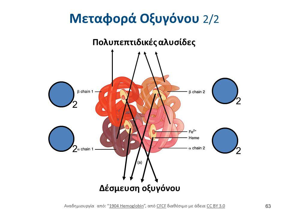 Κορεσμός Hb σε Οξυγόνο Σχετική μικρή συγκέντρωση O2 < HbO2.