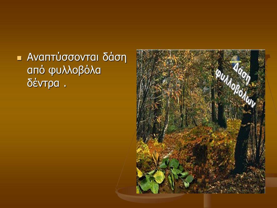 Αναπτύσσονται δάση από φυλλοβόλα δέντρα .