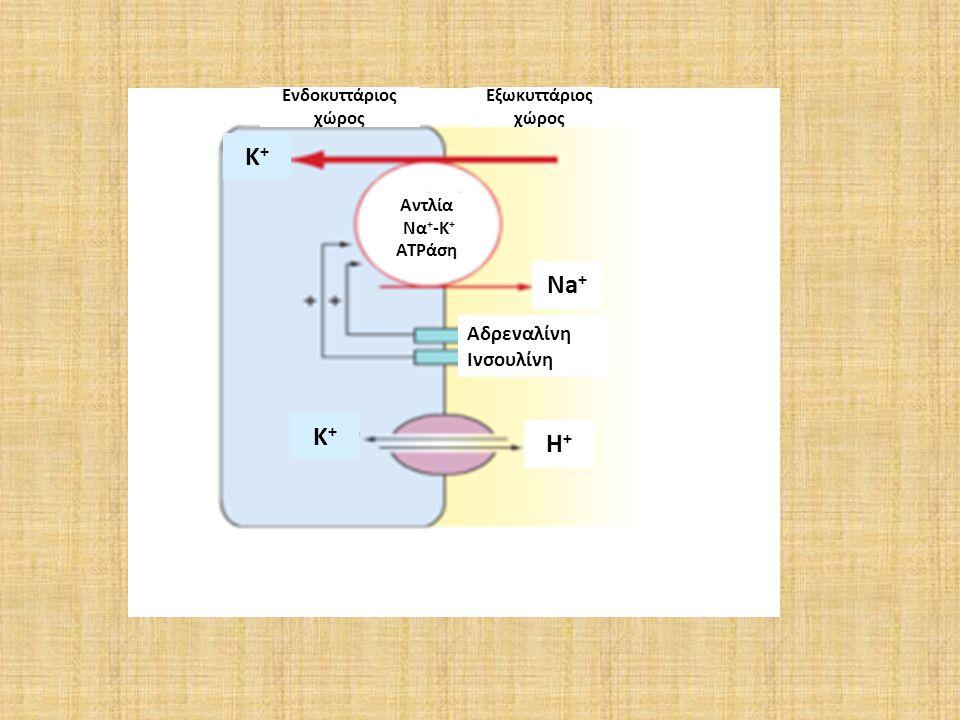 K+ Na+ K+ H+ Αδρεναλίνη Ινσουλίνη Ενδοκυττάριος χώρος