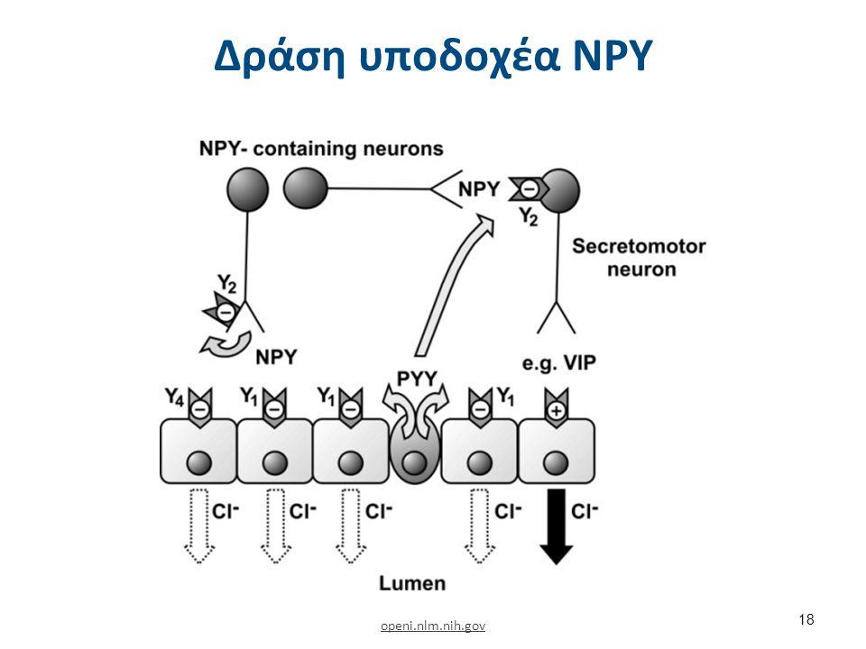 Νευρογενείς μηχανισμοί στον έλεγχο της πρόσληψης τροφής (NPY) 3/9