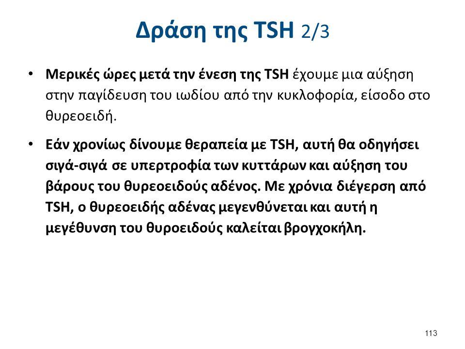 Δράση της TSH 3/3