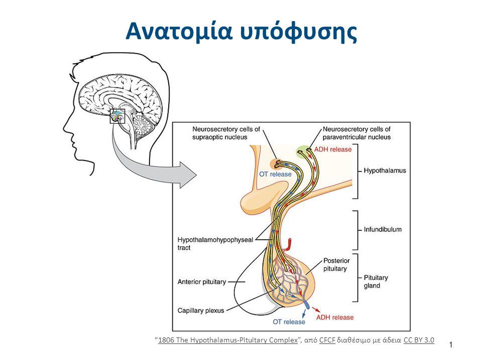 Υπόφυση και επίφυση Illu pituitary pineal glands , από Fuelbottle διαθέσιμη ως κοινό κτήμα