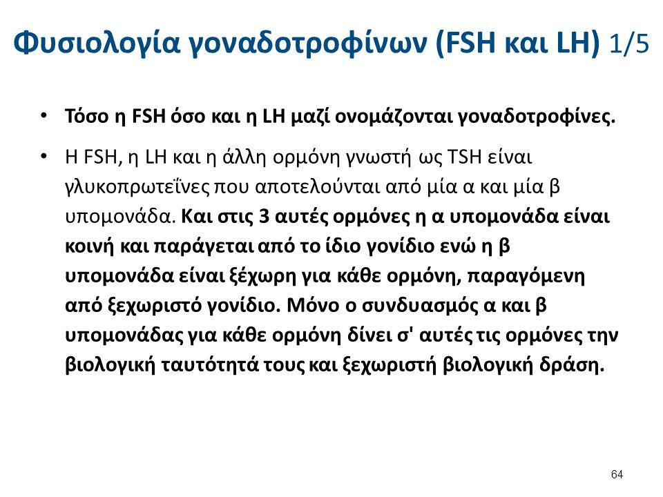 Φυσιολογία γοναδοτροφίνων (FSH και LH) 2/5