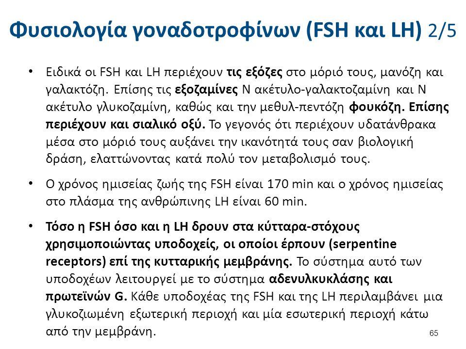 Φυσιολογία γοναδοτροφίνων (FSH και LH) 3/5