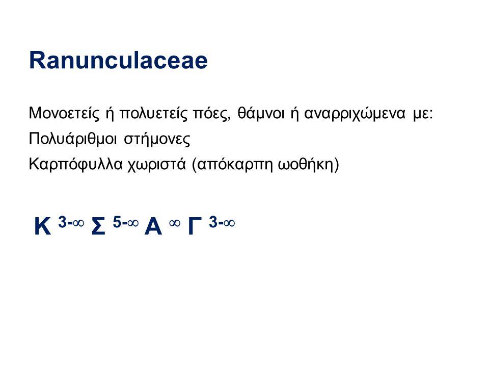 Ranunculaceae Κ 3- Σ 5- Α  Γ 3-