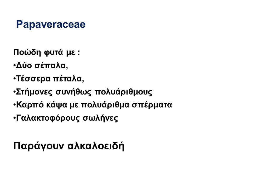 Papaveraceae Παράγουν αλκαλοειδή Ποώδη φυτά με : Δύο σέπαλα,