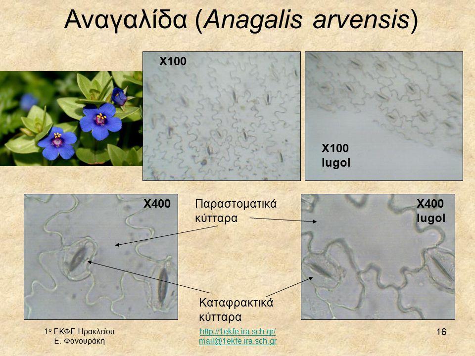 Αναγαλίδα (Anagalis arvensis)