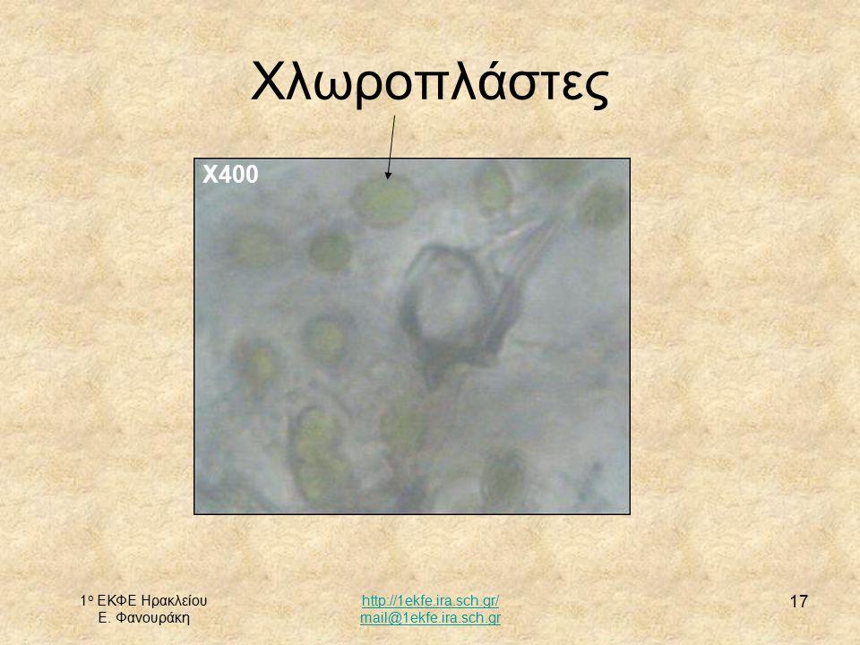 Χλωροπλάστες Χ400 1ο ΕΚΦΕ Ηρακλείου Ε. Φανουράκη