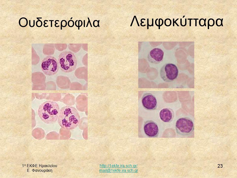 Λεμφοκύτταρα Ουδετερόφιλα 1ο ΕΚΦΕ Ηρακλείου Ε. Φανουράκη