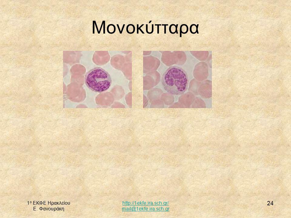 Μονοκύτταρα 1ο ΕΚΦΕ Ηρακλείου Ε. Φανουράκη http://1ekfe.ira.sch.gr/
