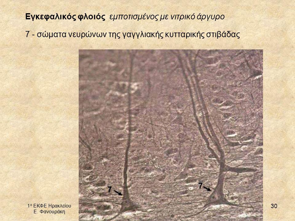 Εγκεφαλικός φλοιός εμποτισμένος με νιτρικό άργυρο