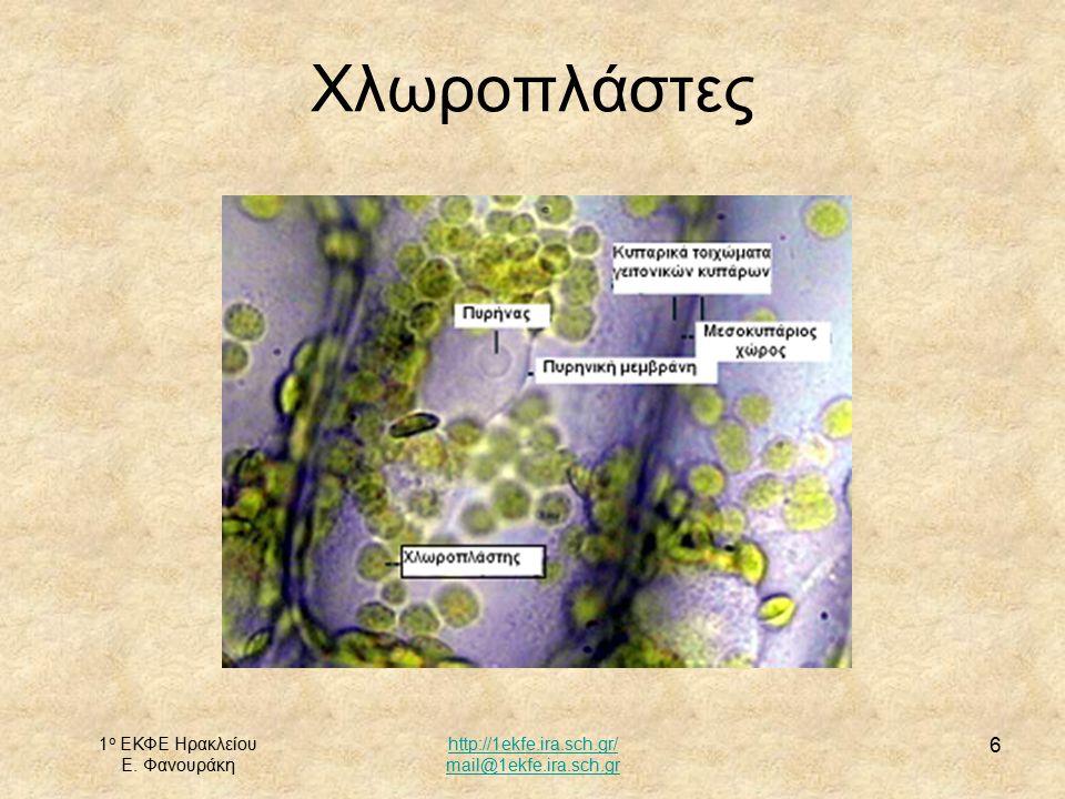 Χλωροπλάστες 1ο ΕΚΦΕ Ηρακλείου Ε. Φανουράκη http://1ekfe.ira.sch.gr/