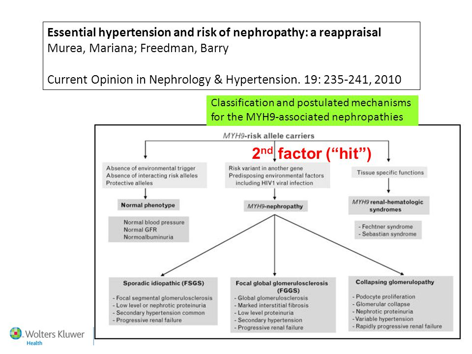 Essential hypertension and risk of nephropathy: a reappraisal