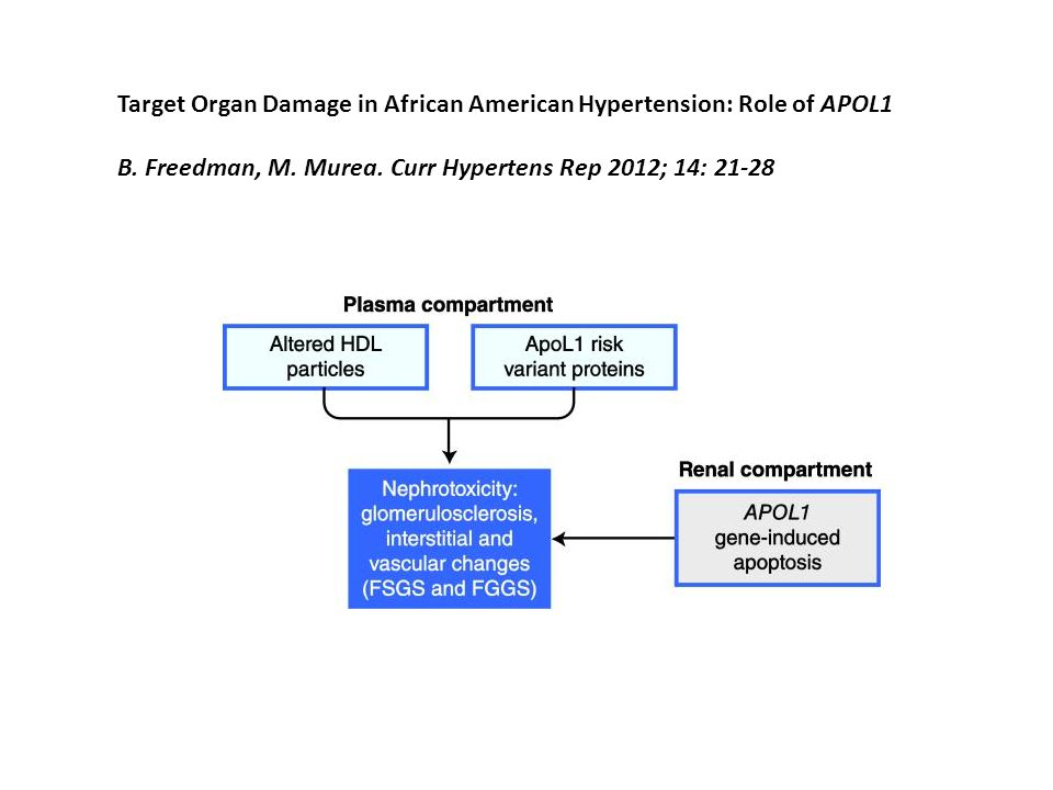 Target Organ Damage in African American Hypertension: Role of APOL1