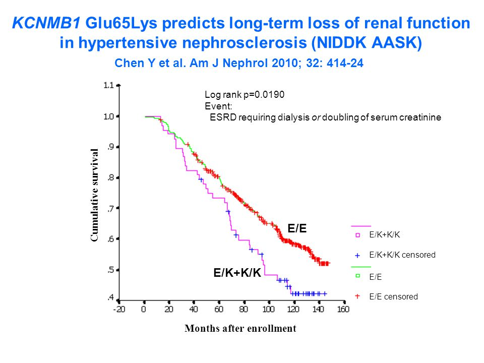 KCNMB1 Glu65Lys predicts long-term loss of renal function