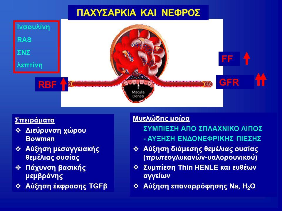 ΠΑΧΥΣΑΡΚΙΑ ΚΑΙ ΝΕΦΡΟΣ FF GFR RBF Ινσουλίνη RAS ΣΝΣ λεπτίνη