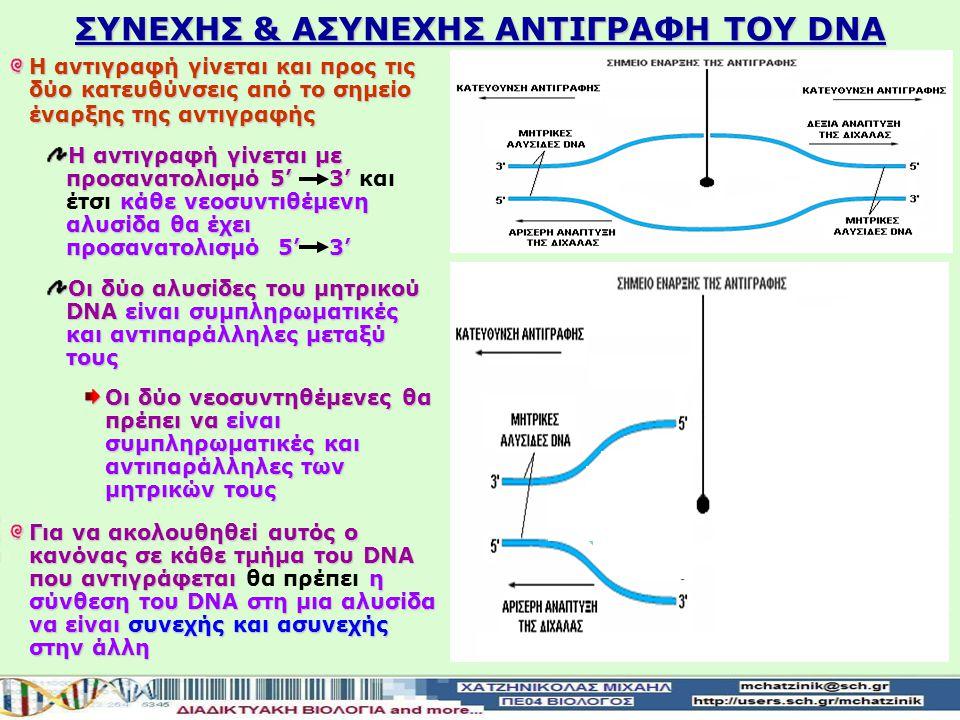 ΣΥΝΕΧΗΣ & ΑΣΥΝΕΧΗΣ ΑΝΤΙΓΡΑΦΗ ΤΟΥ DNA