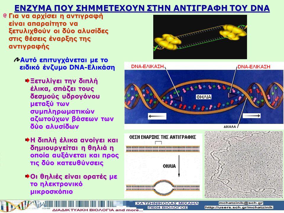 ΕΝΖΥΜΑ ΠΟΥ ΣHΜΜΕΤΕΧΟΥΝ ΣΤΗΝ ΑΝΤΙΓΡΑΦΗ ΤΟΥ DNA