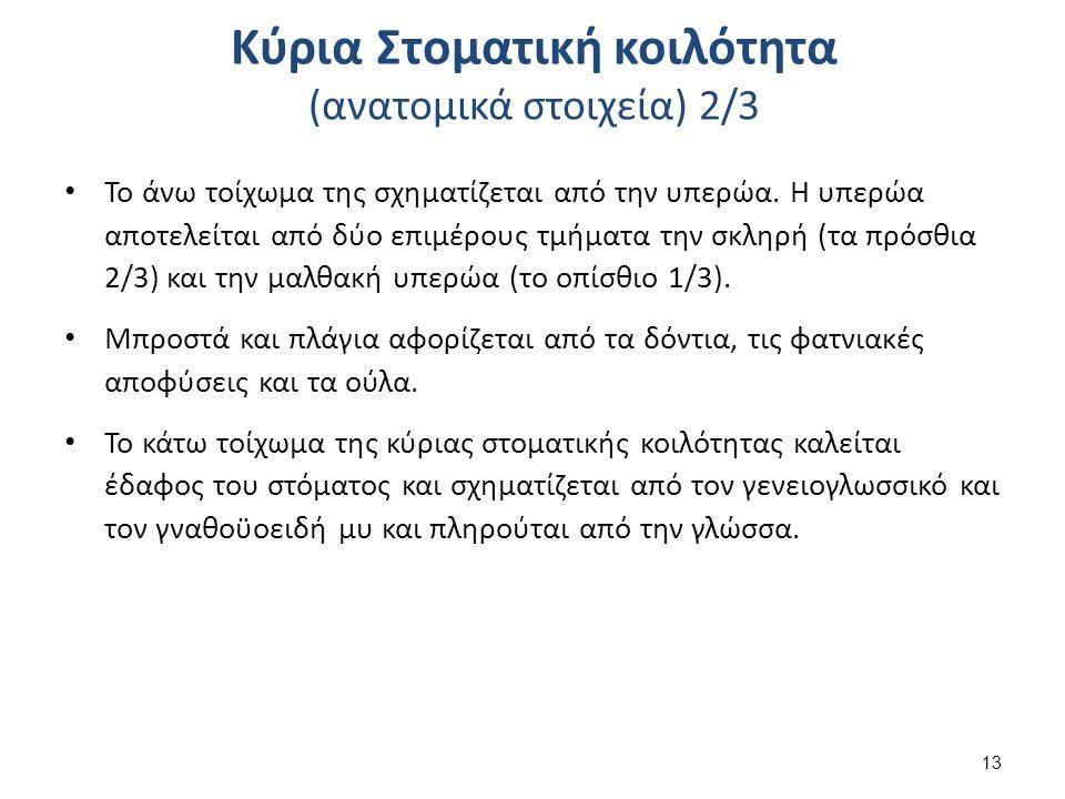Κύρια Στοματική κοιλότητα (ανατομικά στοιχεία) 3/3