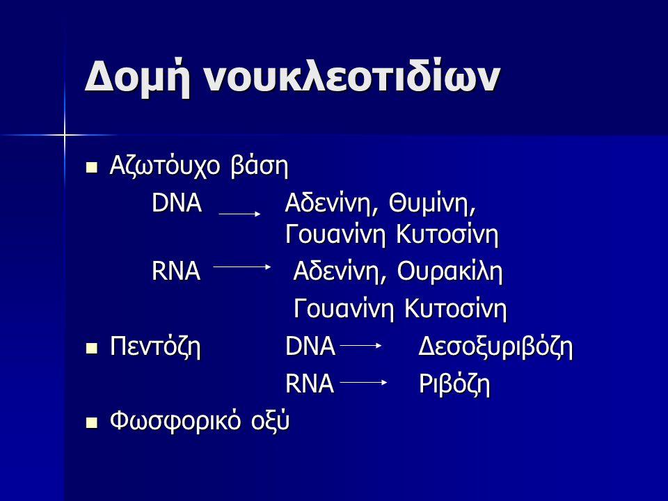 Δομή νουκλεοτιδίων Αζωτόυχο βάση
