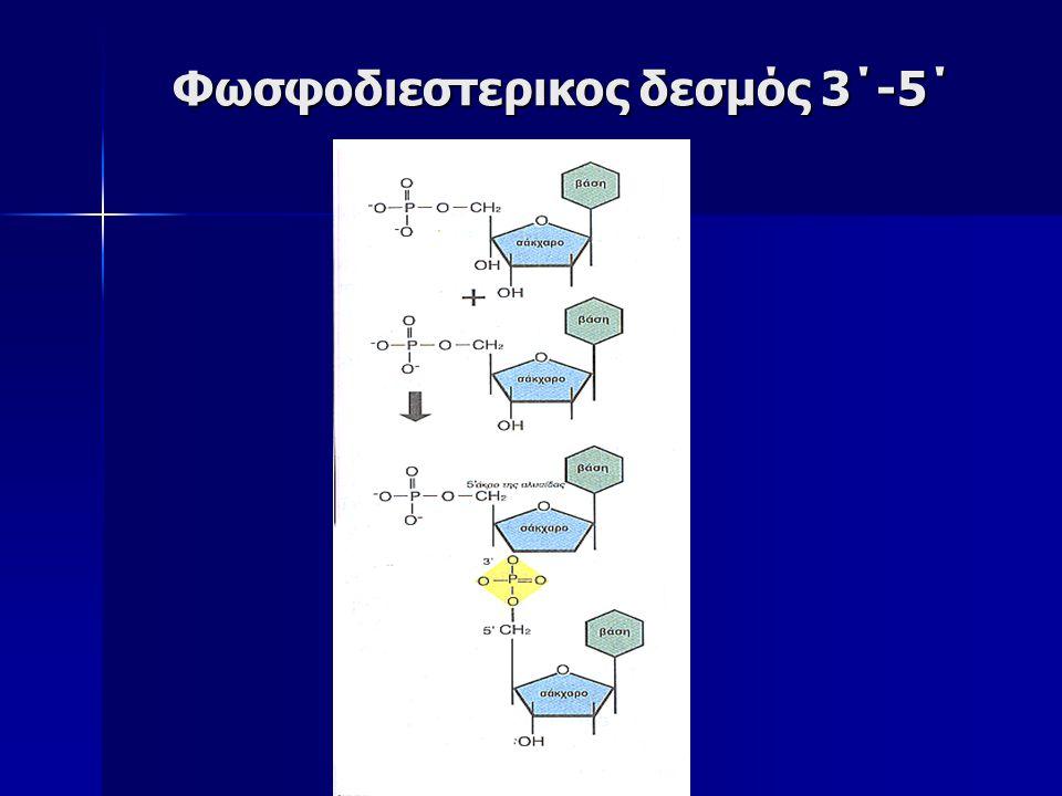 Φωσφοδιεστερικος δεσμός 3΄-5΄