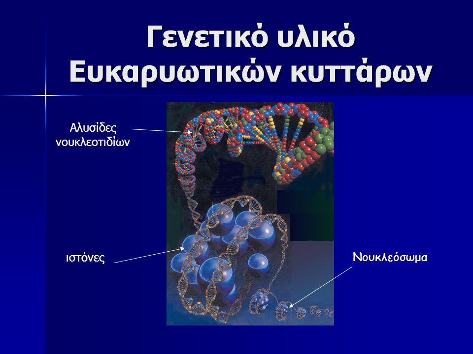 Γενετικό υλικό Ευκαρυωτικών κυττάρων