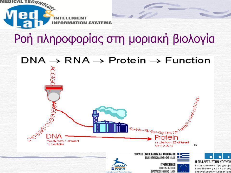 Ροή πληροφορίας στη μοριακή βιολογία