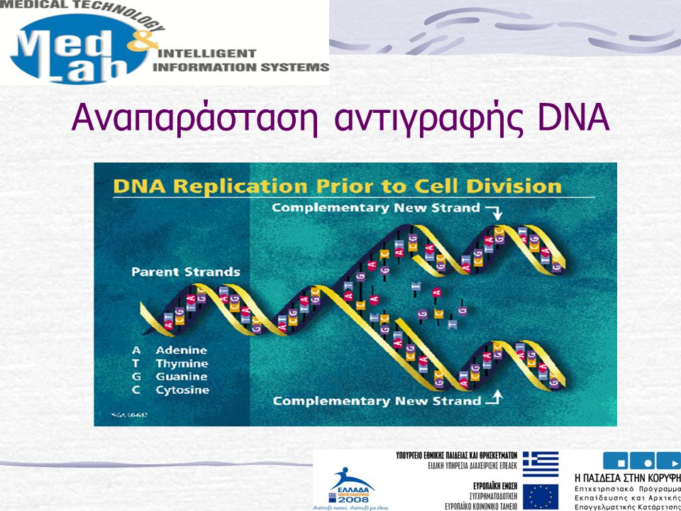 Αναπαράσταση αντιγραφής DNA