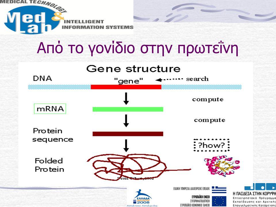 Από το γονίδιο στην πρωτεΐνη
