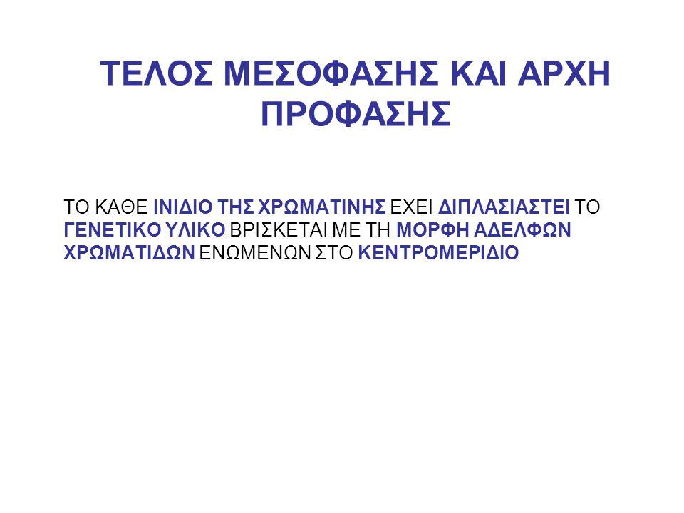 ΤΕΛΟΣ ΜΕΣΟΦΑΣΗΣ ΚΑΙ ΑΡΧΗ ΠΡΟΦΑΣΗΣ