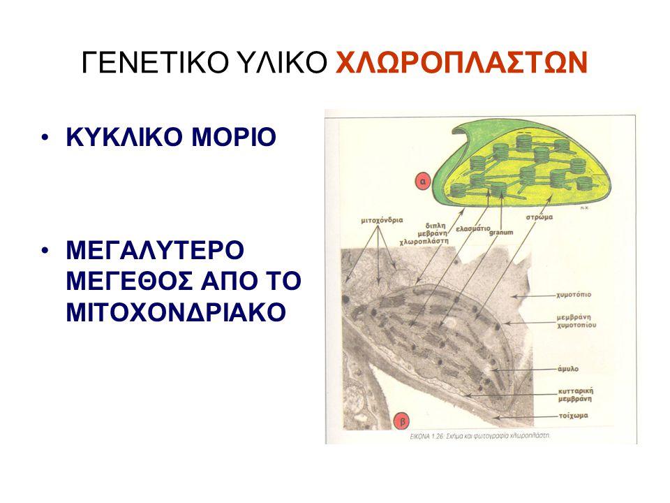 ΓΕΝΕΤΙΚΟ ΥΛΙΚΟ ΧΛΩΡΟΠΛΑΣΤΩΝ