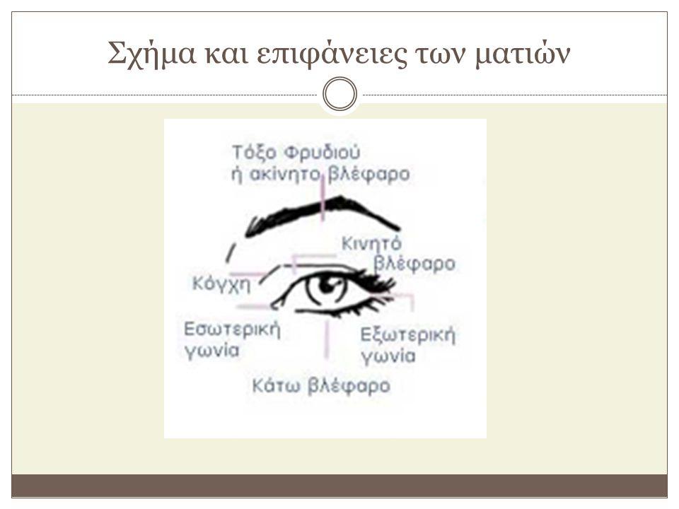 Σχήμα και επιφάνειες των ματιών