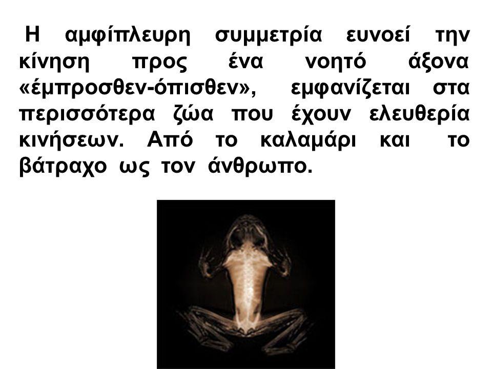 Η αμφίπλευρη συμμετρία ευνοεί την κίνηση προς ένα νοητό άξονα «έμπροσθεν-όπισθεν», εμφανίζεται στα περισσότερα ζώα που έχουν ελευθερία κινήσεων.