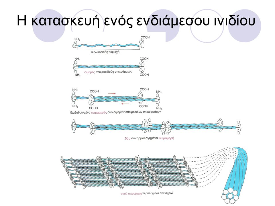 Η κατασκευή ενός ενδιάμεσου ινιδίου