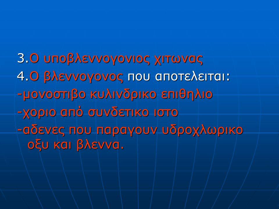 3.Ο υποβλεννογονιος χιτωνας
