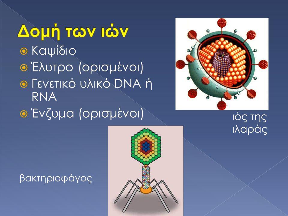 Δομή των ιών Καψίδιο Έλυτρο (ορισμένοι) Γενετικό υλικό DNA ή RNA