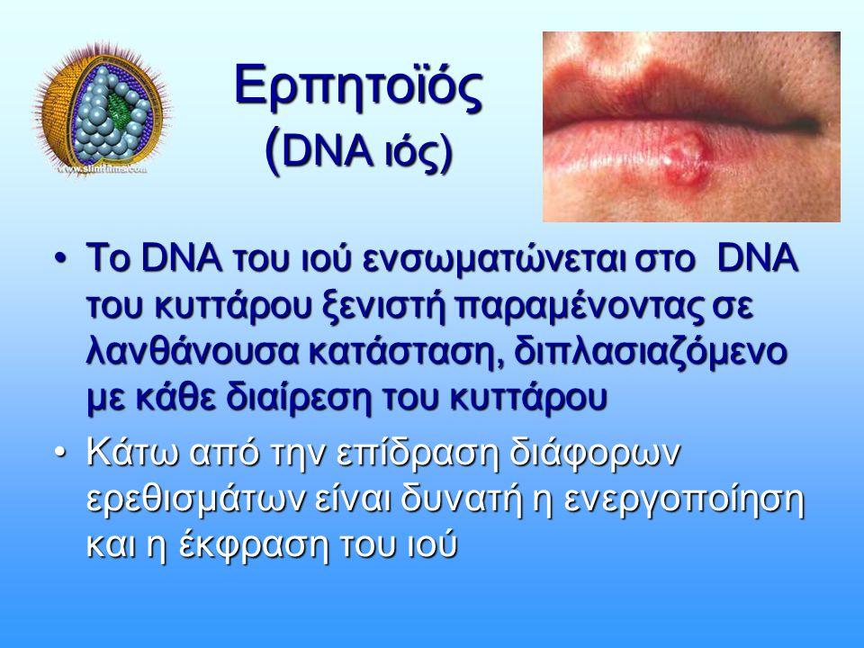 Ερπητοϊός (DNA ιός)