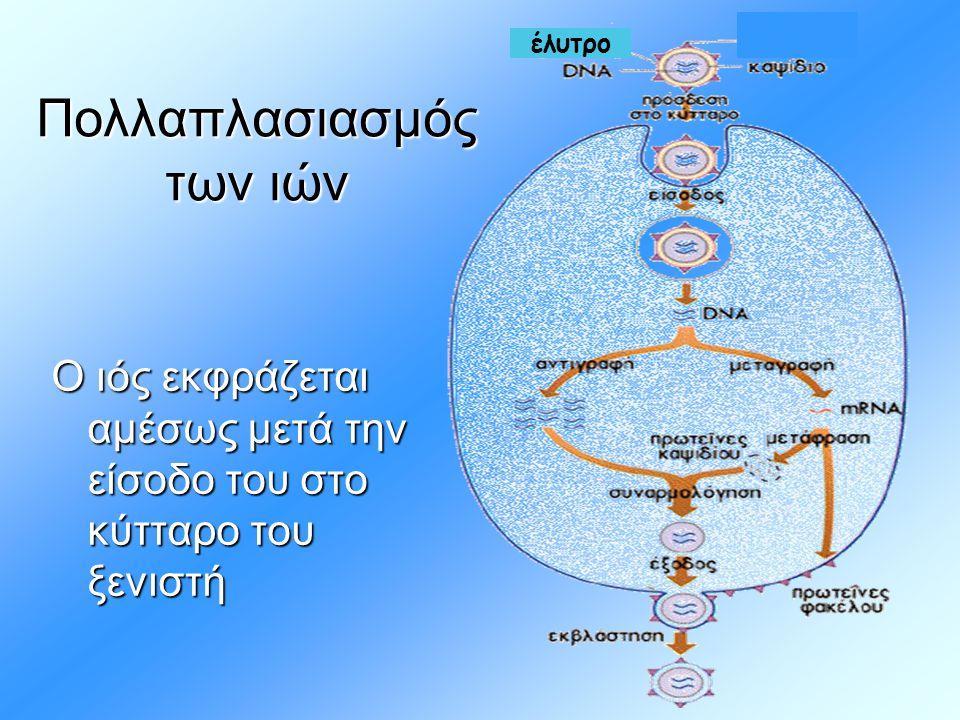 Πολλαπλασιασμός των ιών