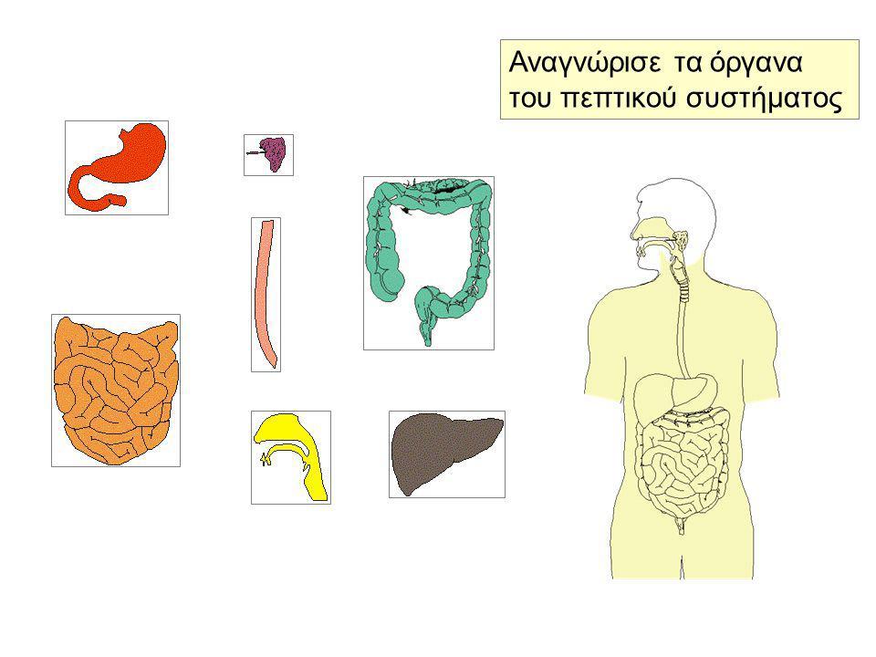Αναγνώρισε τα όργανα του πεπτικού συστήματος