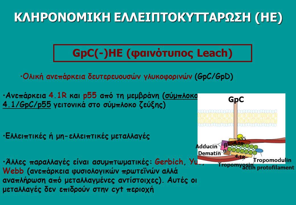GpC(-)HE (φαινότυπος Leach)