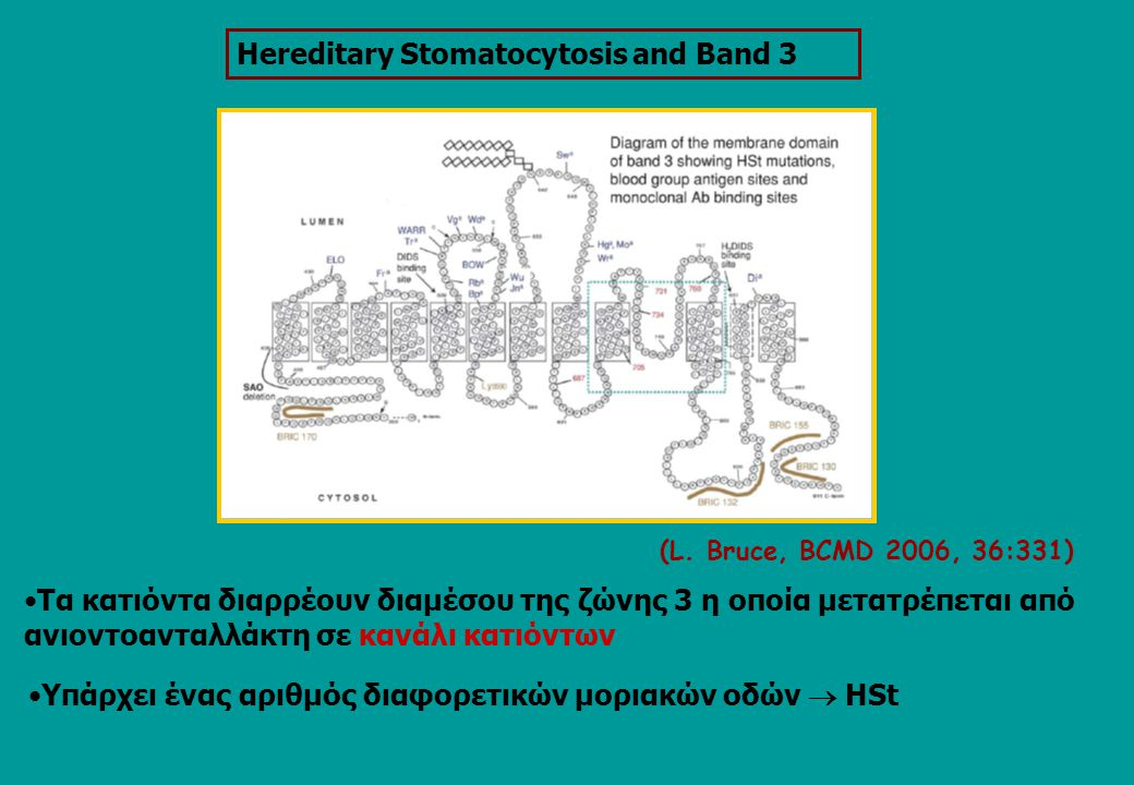 Ηereditary Stomatocytosis and Band 3